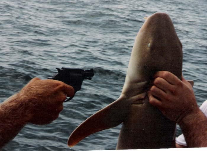 how to catch gummy shark off beach